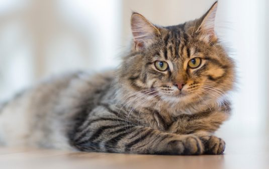 Cats may help children with autism
